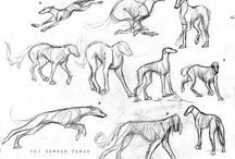 referencias perros / referencias perros