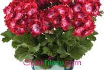 çiçek bakimi