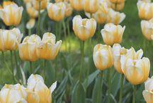 04 flower & nature inspirations