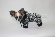 Dog Pyjamas / by Mighty Dog Clothes co.