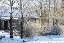 Talvi / Talvikuvia 2015-16