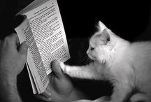 The love between cats&books
