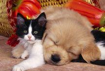 Tapety - zwierzęta - pies z kotem