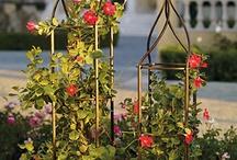 Home Inspiration / Basic gardening
