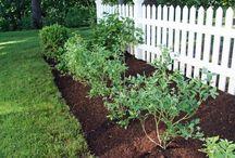 Fruit bushes, trees / Propagating etc