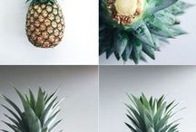 Pineapples How to grow in pors