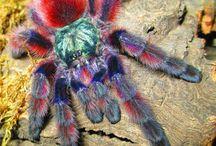 Arachnids / Spiders!!!