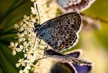 Schmetterlinge & Co