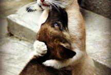 animals / love