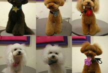 dog grooming haircut ideas