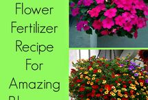 Flower beds and pots / Recipe