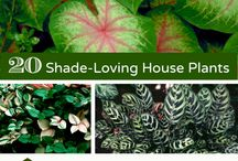Home plants & home ideas