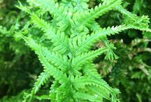Inspiring ferns and foliage / Interesting shapes and patterns