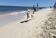 Perth Dog Beaches