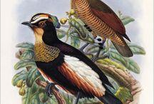 ****Ornitologia