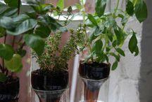Prezentacja roślin