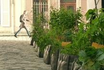 Rent a plant / #Rent a plant - Mieten Sie #Pflanzen, #Containerpflanzen - ihr #GaLaBau in #Jüchen www.ericclassen.de