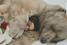 Furry friend