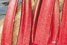 Rhubarb / by gardenlady