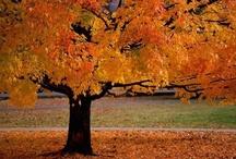My Favorite Season / by Sandy Ortner