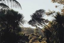 -------TROPICAL DESSERT / by ( CHERCHELaRose )