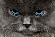 Here, Kitty, Kitty! / by Janice Whitaker