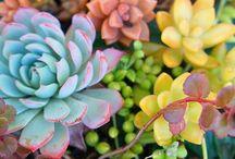 Pozsgások,kaktuszok.......