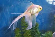 Aquariums - Autres poissons