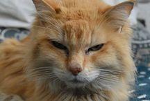 Cats, Gatos / Fotos de Ale Key, Mamichos y Joncy