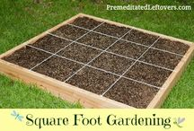 veggie garden ideas