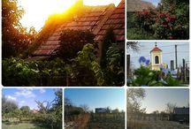 Zsíbotin viinipuutarha-alue