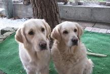 """I miei cagnoloni / Chi non ha posseduto un cane non può capire cosa vuol dire: """"Amore incondizionato""""..."""