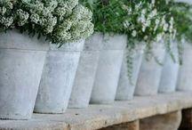 erbe profumate in terrazza