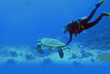 Holidays in Andaman & Nicobar Islands / Havelock Island in Andaman and Nicobar Islands: Get Diving & Relaxing experience, Holidays tour & beaches information on Havelock Island. Also find out attractions, sightseeing, weather, maps, nightlife & festivals at Tricolor Voyages.