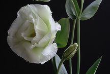 ostatní květiny