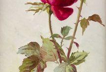gül çiçek