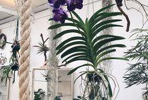 Flora interessante