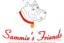 Sammie's Available Horses / Beautiful horses looking for a second chance and a forever pasture to call their own.