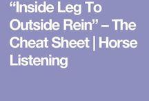 dressage tips