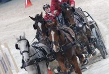 Driving verona 2013 -  Opening Competition / Ph. Stefano Grasso - http://drivingverona.fieracavalli.it/