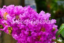 garden shopping / beszerzendő növények forrással