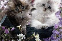 cats/animals