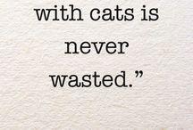 Cat Quotes and Cat Lady Wisdom