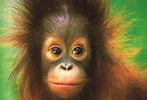 Malaysia & Borneo / Discover Malaysia & Borneo with our favourite images: