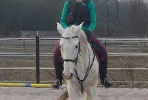My friend horse & me