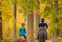 Top 10 Places to See Fall Foliage in Wilmington and the Brandywine Valley