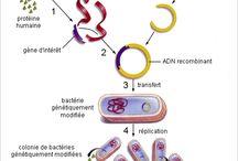 biotechnologies - nanotechnologies / biotechnologie - nanotechnologie - bionanotechnologies