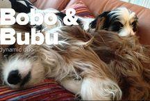 Bubu&Bobo