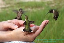 Hummingbird Heaven