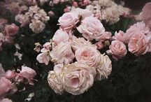 Flowers / by Patsy Lambert